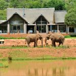 Escape to the bush in Gauteng @ Askari